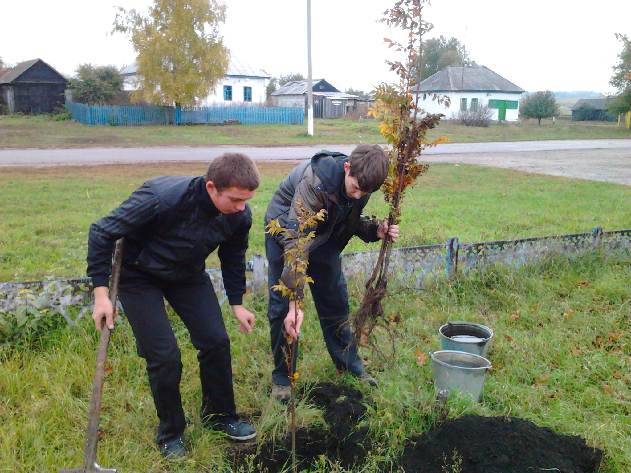 Когда посадить рябину: весной или 91